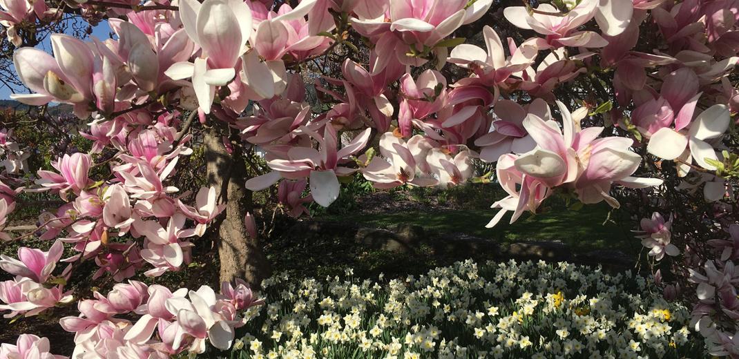 Frühling im Ayurveda